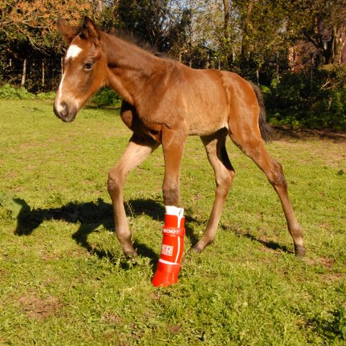 Foal Boot