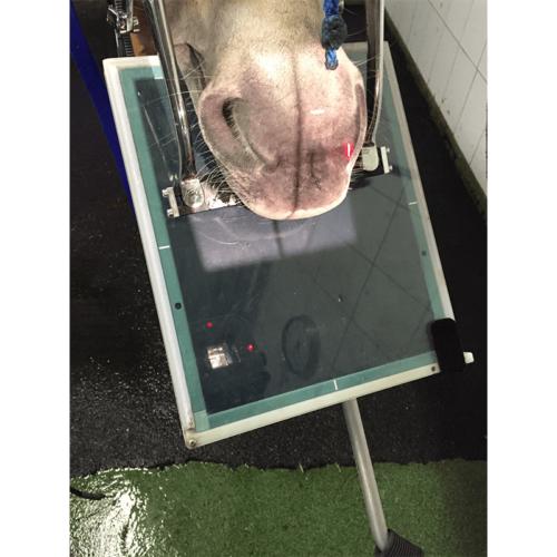 equine dental x-ray