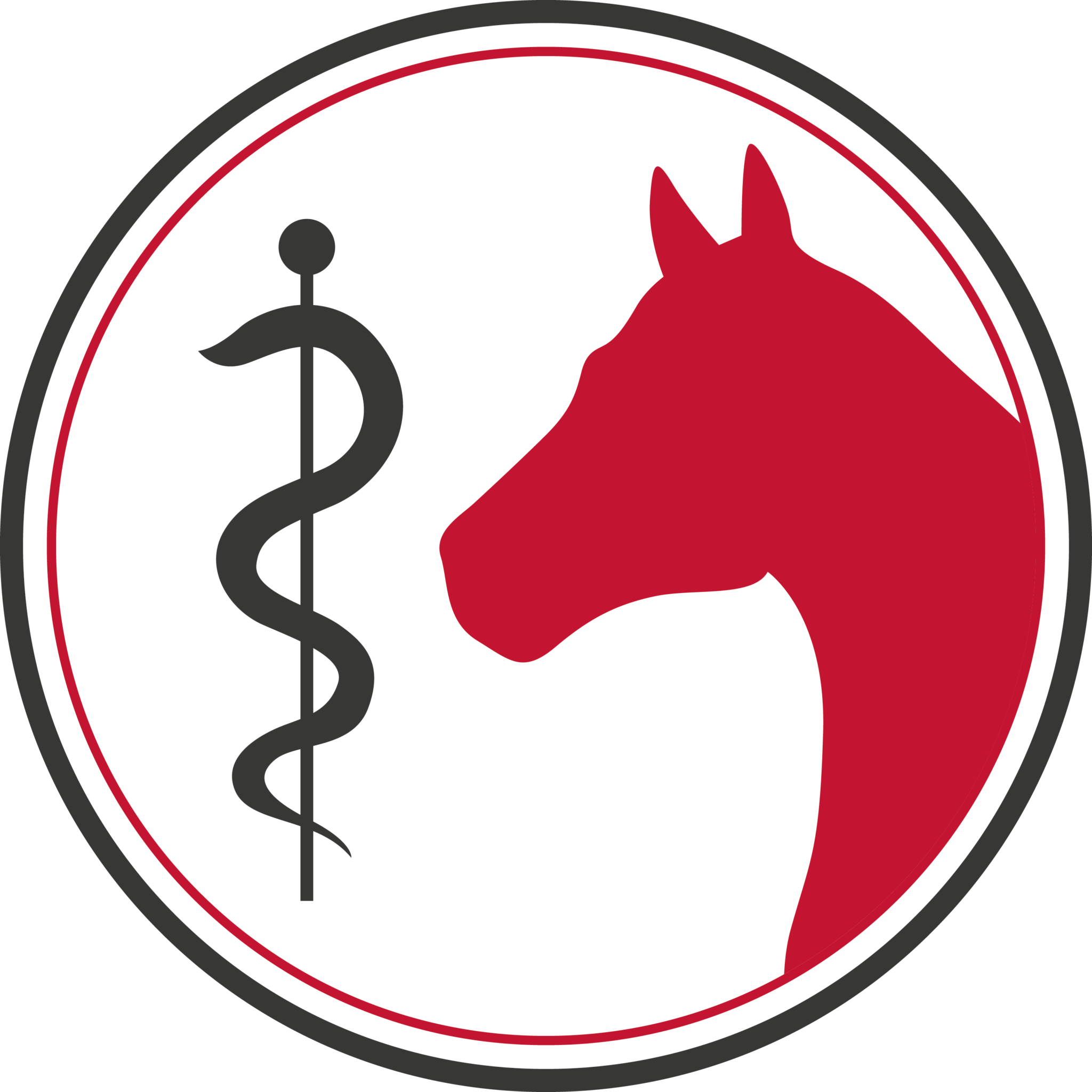 BARKHOF Workshop: The Horse's Knee Joint